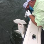 hammerhead fishing trip